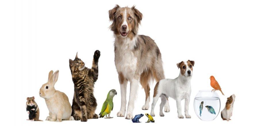 Çocuklarımız ve evcil hayvanlar
