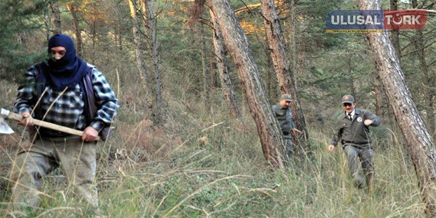 Usulsüz ağaç kesenlere 10 yıla kadar hapis cezası