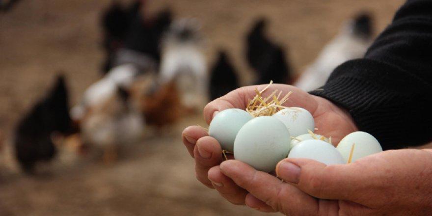 Bu nasıl bir yumurta