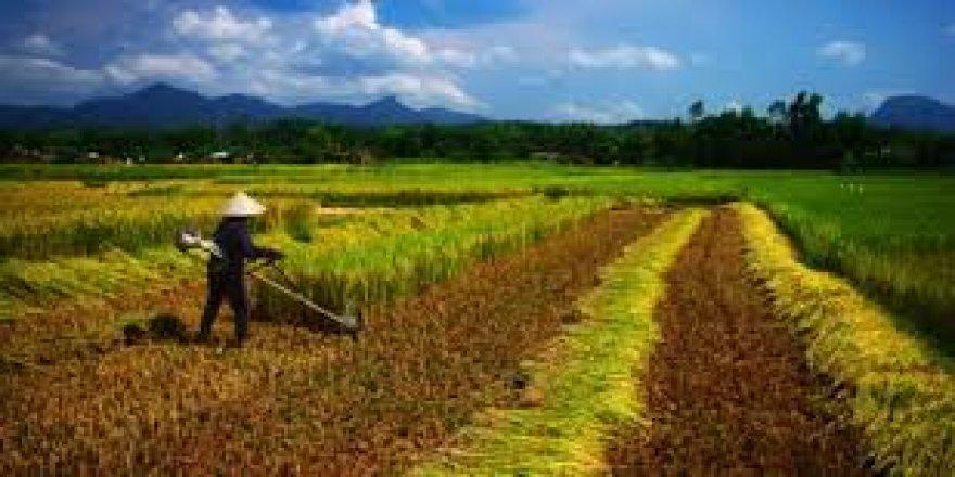 Tarımda istihdama artış geliyor