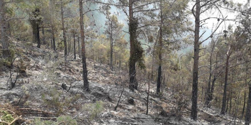 100 Hektar Alan Zarar Gördü