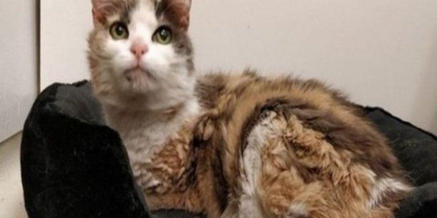 Hollanda'da evden kaçan kedi 17 yıl sonra bulundu