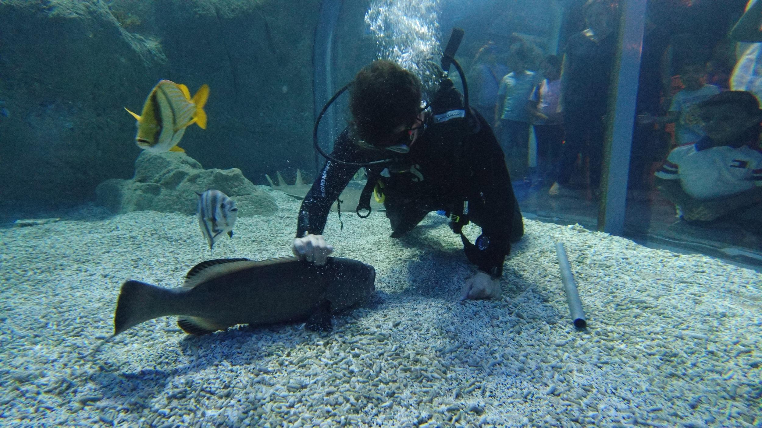 stanbul'da Köpek balıklarıyla ile dalış keyfi