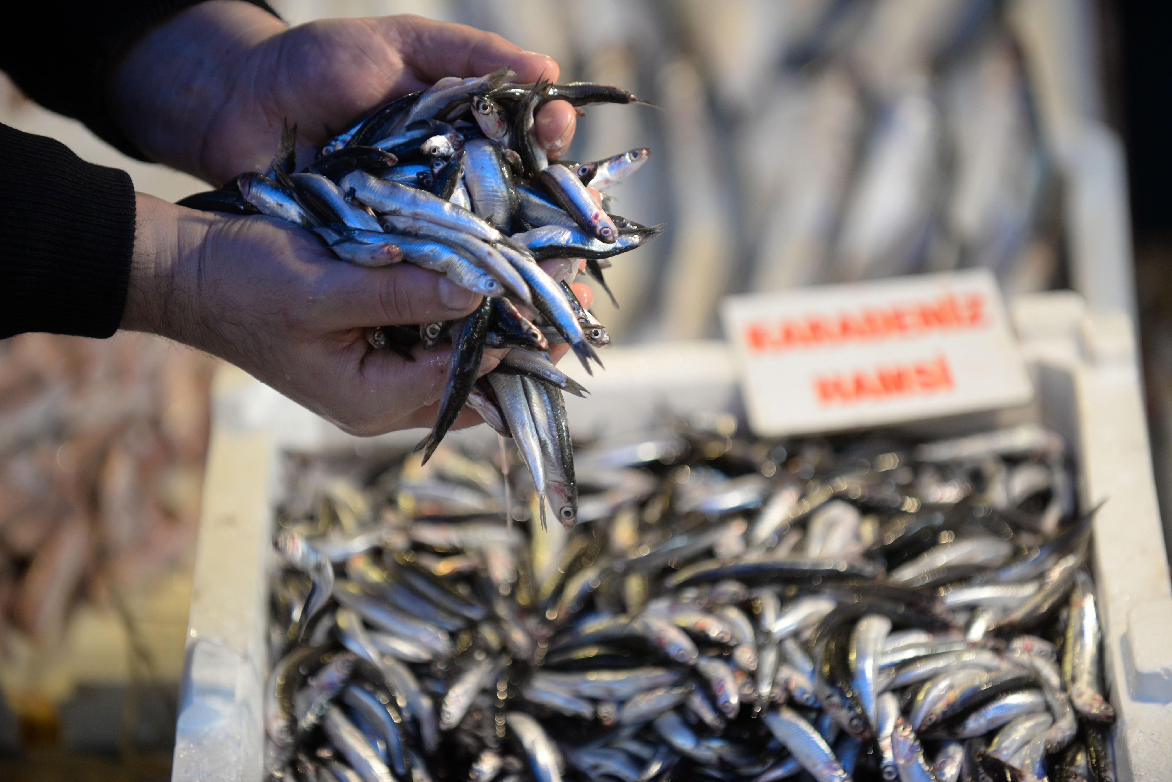 Av yasağının bitmesiyle balıkçılar sezonda umduğunu bulamadı