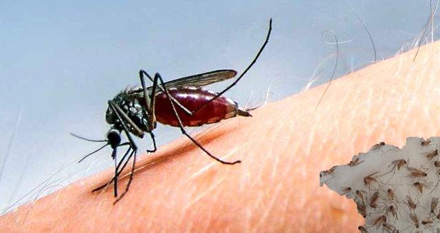 Batı Nil Ateşi virüsü özellikle çocuklarda ve hamile kadınlarda hayati riske neden olabilir