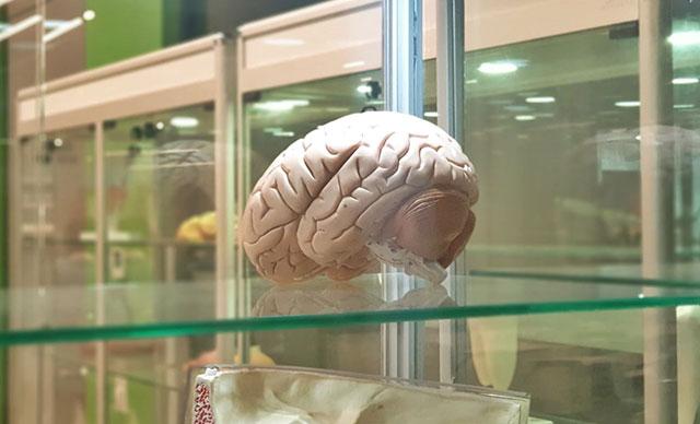 Yapılan çalışmalar ile Beyin implantları hafızayı yüzde 20 arttırıyor