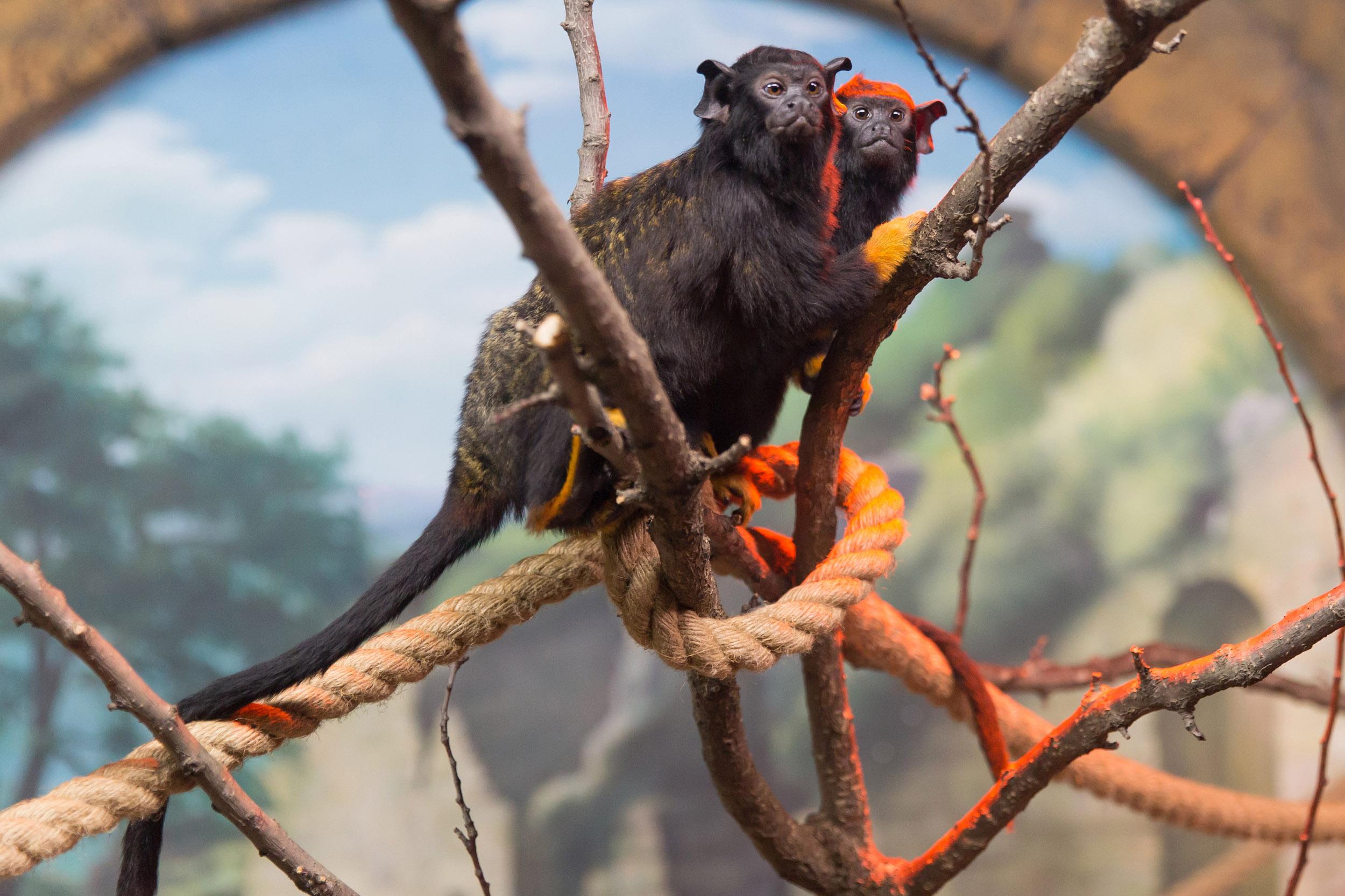 Jungle Park'ta bulunan hayvanların kendileri de beslenmeleri de özel