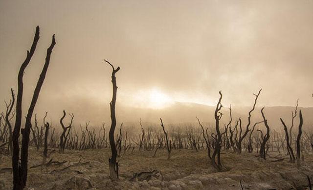 Koronavirüs iklim değişikliğini durduramaz
