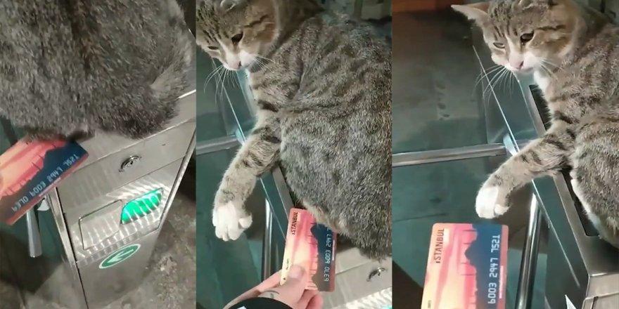 İstanbul Metro turnikesinde geçişe izin vermeyen kedi