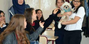 Hayvanlar sınıfta