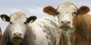 Et Fiyatlarında Düzenleme