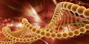 Kanser ile mücadelede doğal yollar