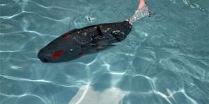 Su altının yeni kaşifi: Akıllı robot balık