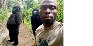 Virunga Doğa Parkındaki gorillerin selfie pozu gündem oldu