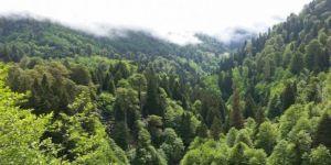 1995 – 2015 yılları arasında Avrupa kıtasında ormanlık alan 90 bin metrekare arttı.