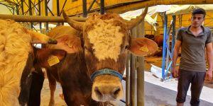 Büyükbaş hayvan ithalatı yüzde 70, koyun ise yüzde 79 düştü