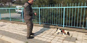 Elektrik arızasını tespitte artık özel eğitimli köpekler devrede