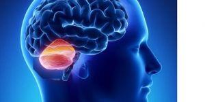Uzman Doç. Dr. Miktat Kaya; Baş ve omuz ağrısı beyincik sarkmasının belirtisi olabilir