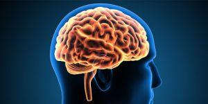 Dr. Engin Eker; İnsanların deneyimleri beynin yapısını şekillendiriyor